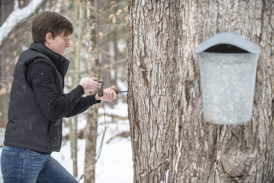 Backyard Maple Sugaring 101: When to Tap - Vermont ...
