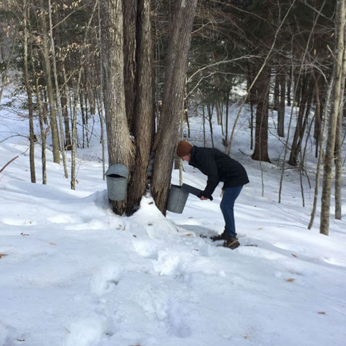 person tapping tree